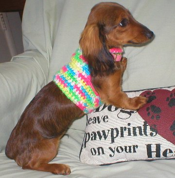 Easy Crochet Dog Sweaters